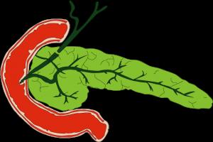 すい臓は120g程度の小さな臓器です。